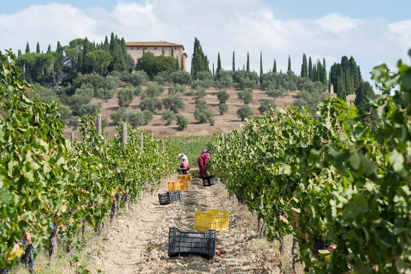 How to taste Montalcino wine